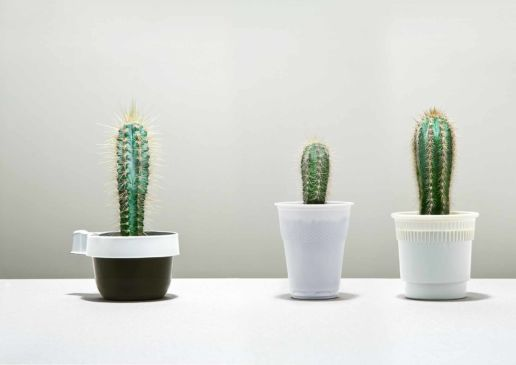 Three cactus in coffee cups