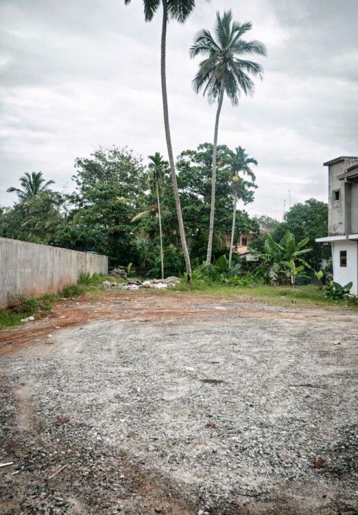 resort backyard with palm