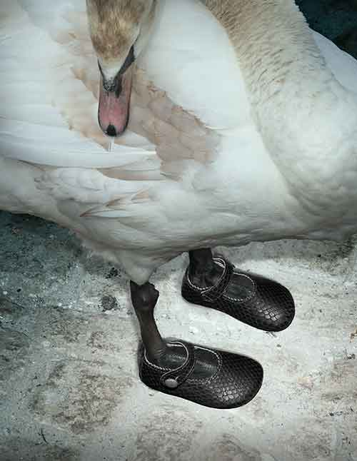 children shoes on swans feet